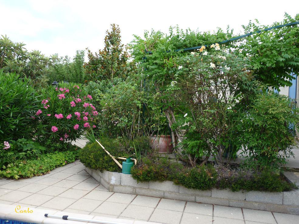 Mon Jardin Eté 2012 - Massif Terrasse & Laurier Rose   Flickr