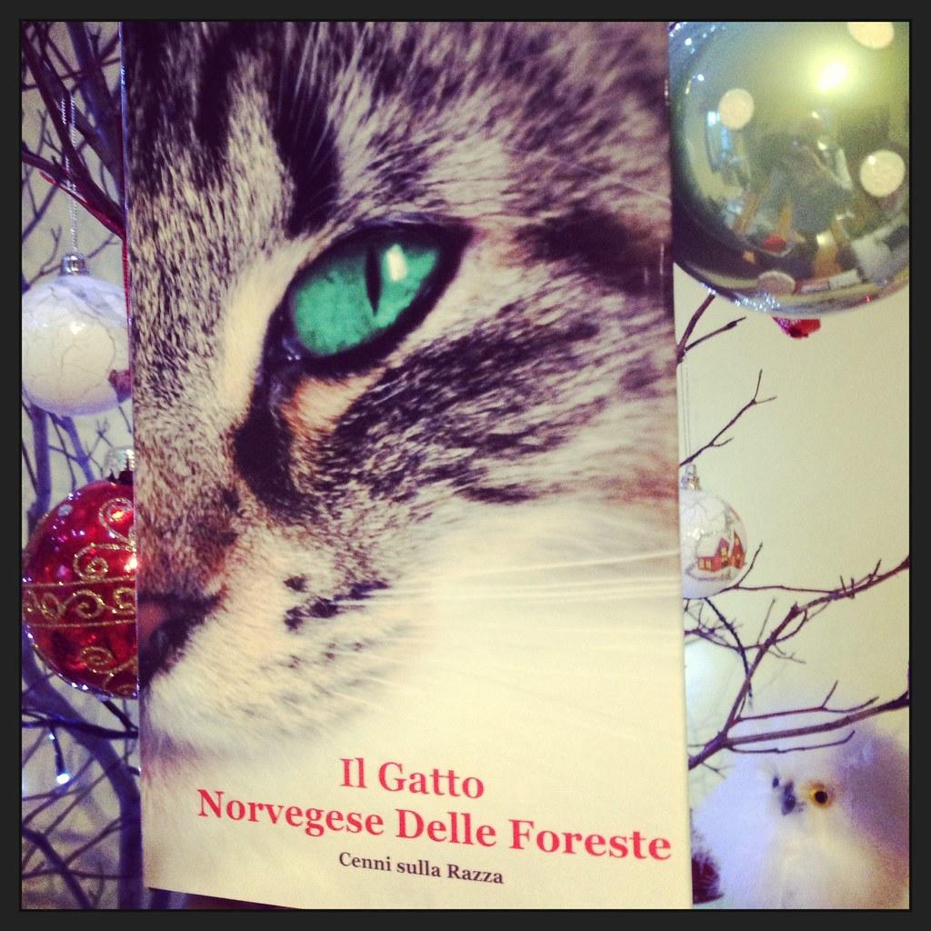Il Libro Del Gatto Norvegese Delle Foreste Itblurbcombo Flickr