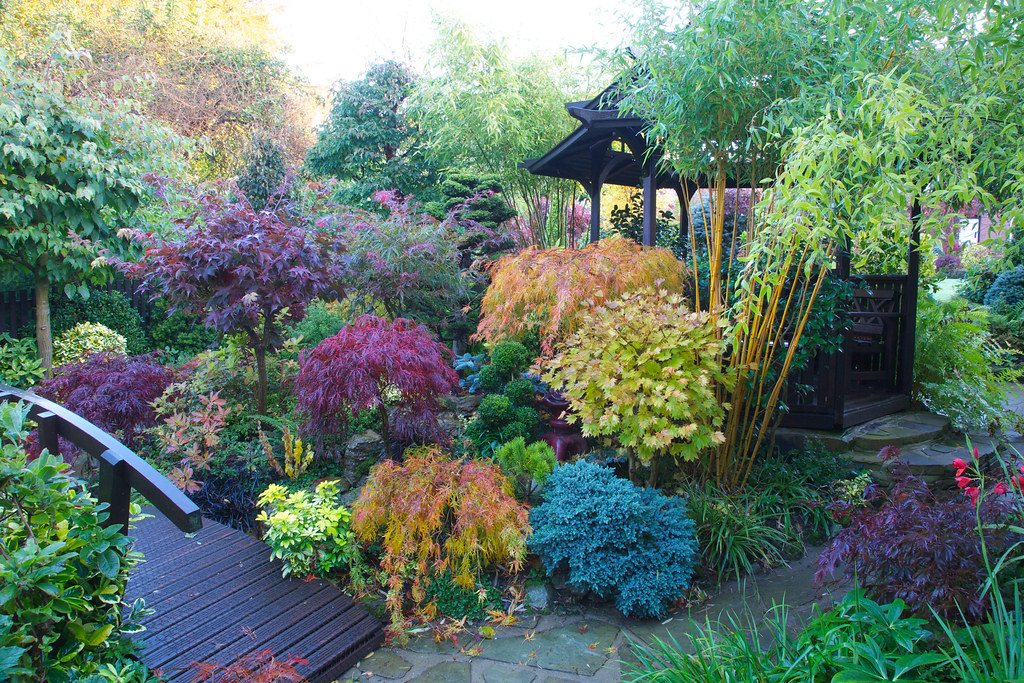 Autumn japanese maple colours in our west midlands garden for Japanese garden colors
