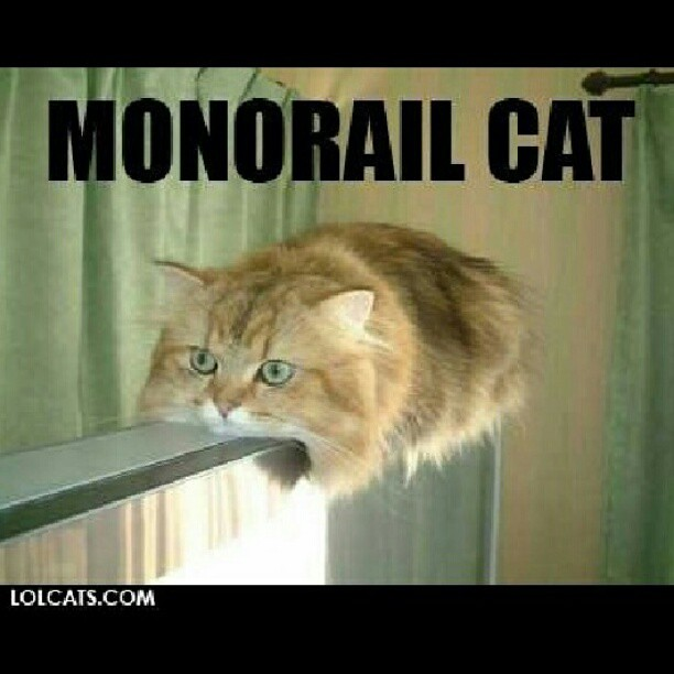 monorail cat funny humor  edy funnypictures insta flickr