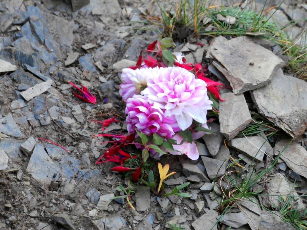 Flowers OLYMPUS DIGITAL CAMERA Jennifer C