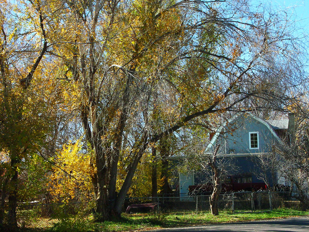 Large Tree And House Neighborhood November 2012 Amy