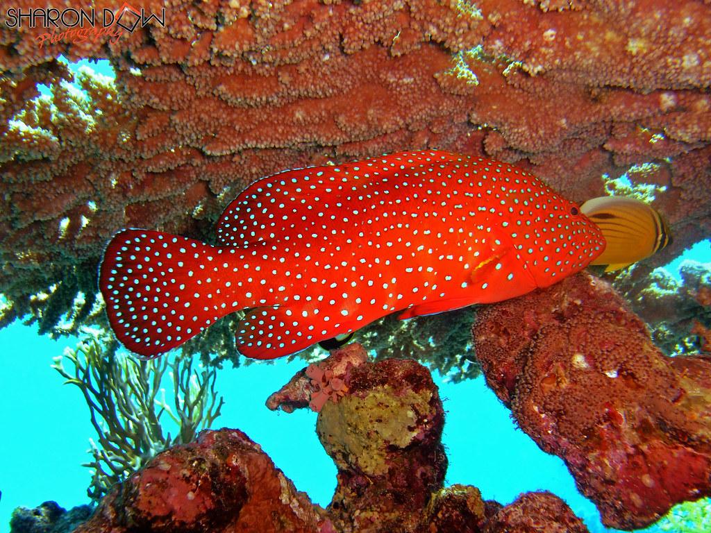 Red Sea Hotels Startseite