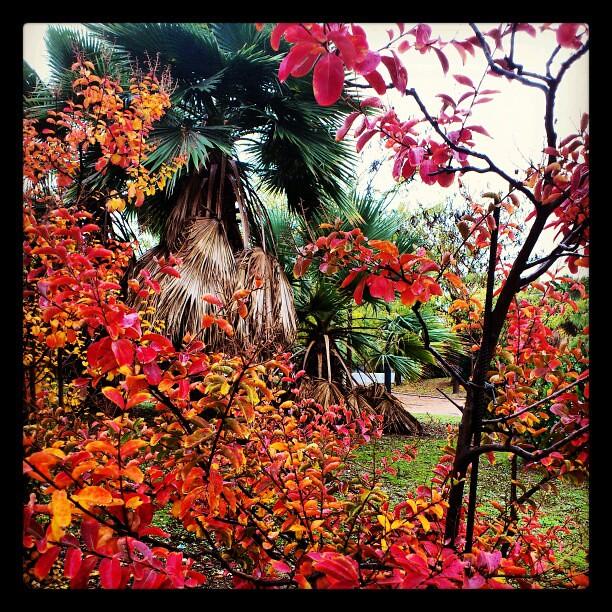 Oto o una de las estaciones m s bonitas del a o mazintosh - Fotos bonitas de otono ...