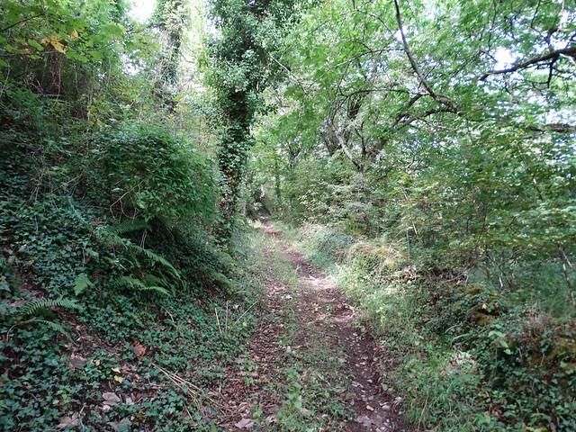 Camino en la Ruta do Souto de Agüeira