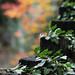 Autumn20121