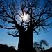 Baobab [explored]