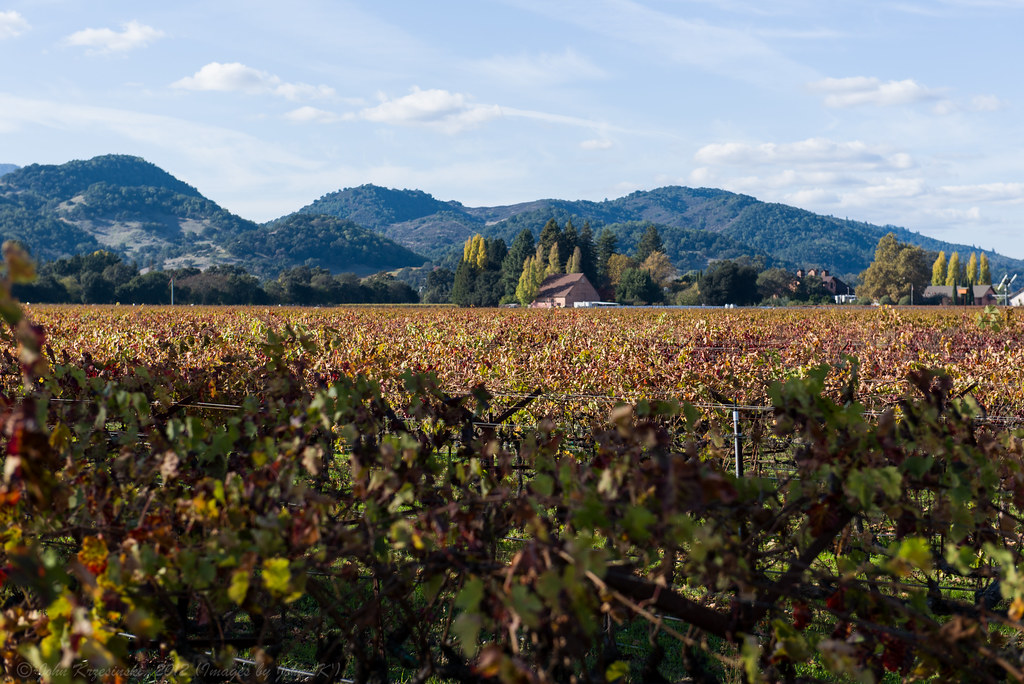 Napa in the Fall