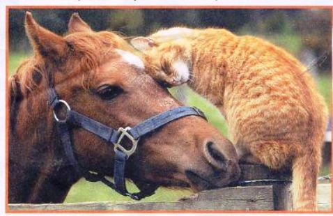 Cat and horse, friends 02  Found on internet  Dona ...