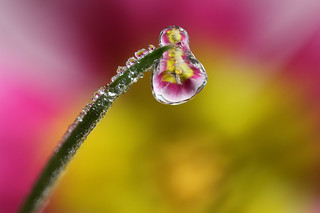Frozen dewdrop #1 | by Lord V