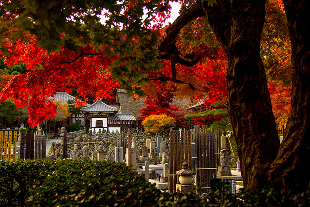 Where to Visit in Autumn