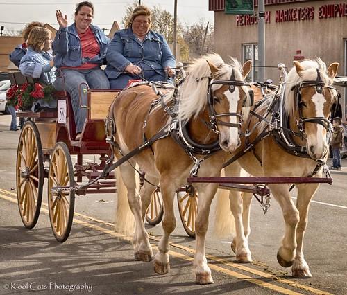 Cat Pulling Wagon : Horses pulling wagon stockyards city christmas parade in