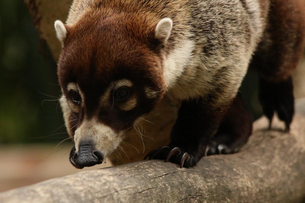 Zoo de la Boissère du Doré 29664038456_8d0e93256b_b