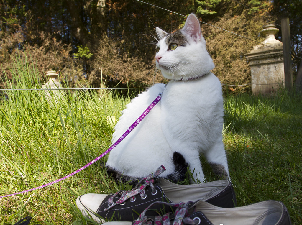 Image result for cat on a leash
