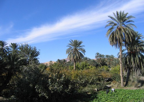 Tunisia's 3 tier system, Gafsa oases | by Globally Important Agricultural Heritage Systems
