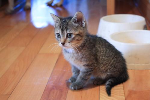 Z the Kitten