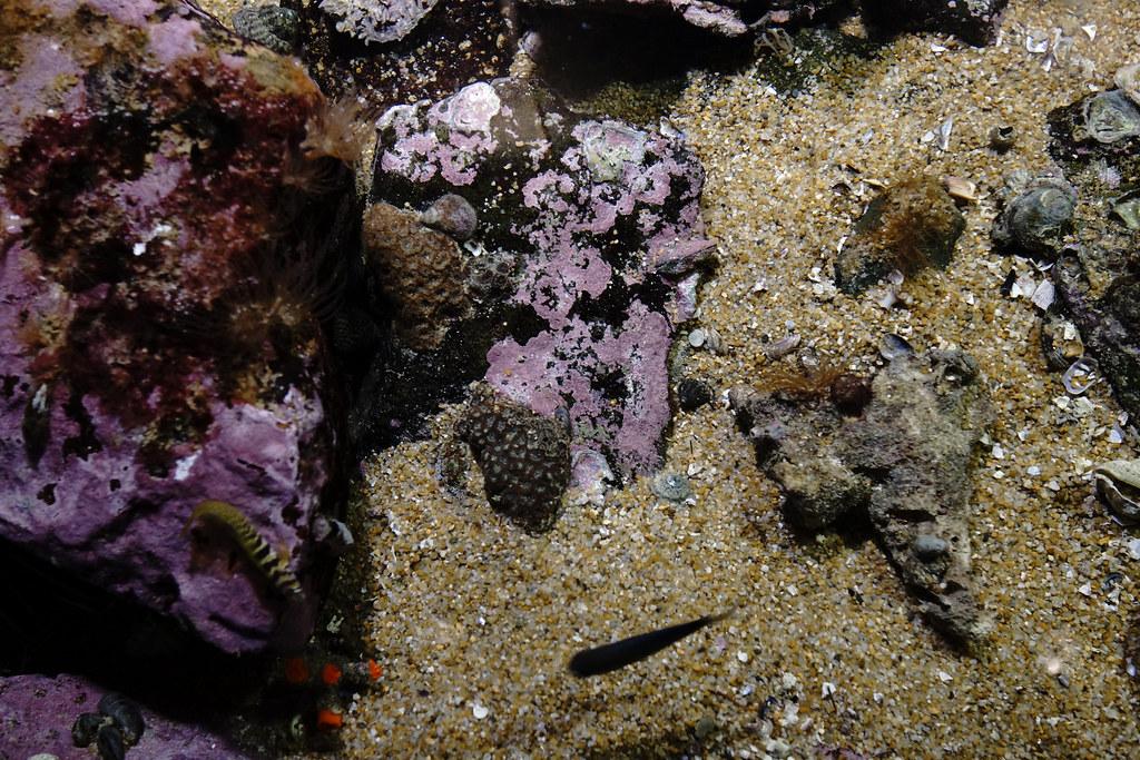 西海国立公園 九十九島水族館「海きらら」