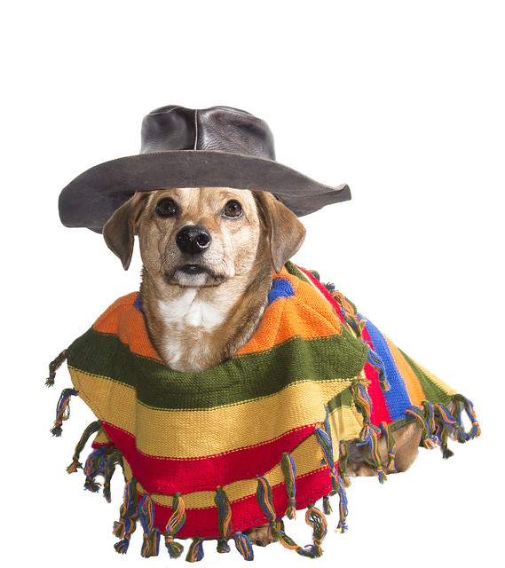 Mexican Dog Mexican dog