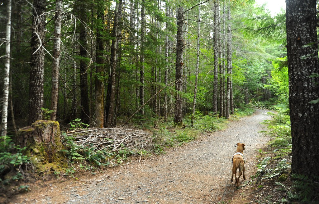 The Dreamy Beauty of Oregon's Lush Rain Forests, Rosie on ...