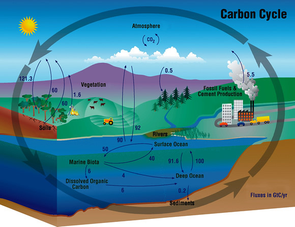 Carbon cycle the annual flux of co2 in gigatons gt or bi flickr carbon cycle by atmospheric infrared sounder ccuart
