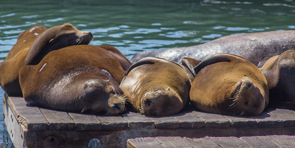 Sea lions sleeping at Pier 39