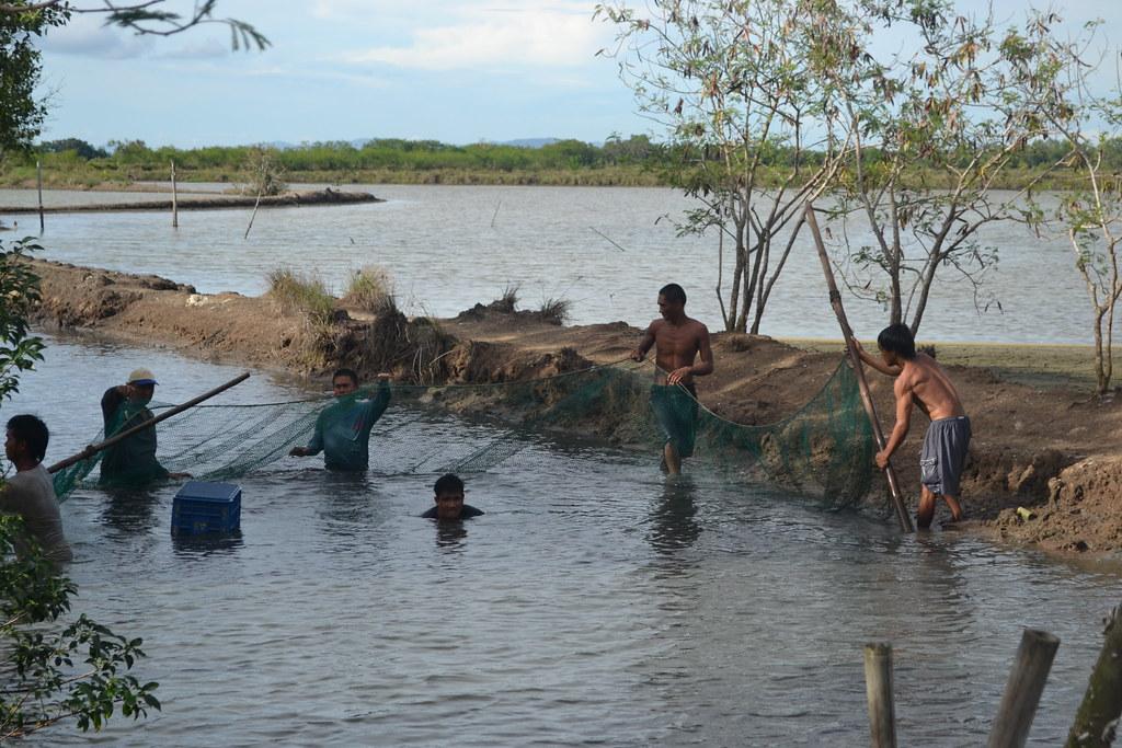 Is Tilapia Aquaculture a Viable Business?