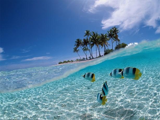 Foto Pemandangan Dalam Laut Foto Pemandangan Ikan Dalam