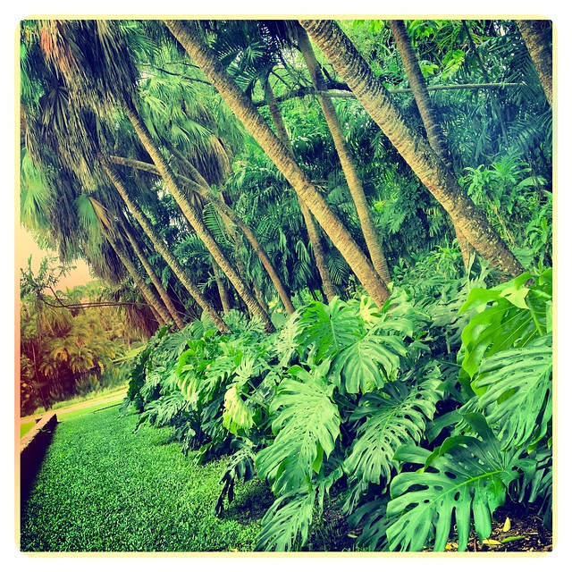 Fairchild Tropical Garden Foliage Miami Florida Plants Trees Flowers Aa77402 Flickr Photo