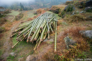 Harvest of Bamboo | by Mark Griffith