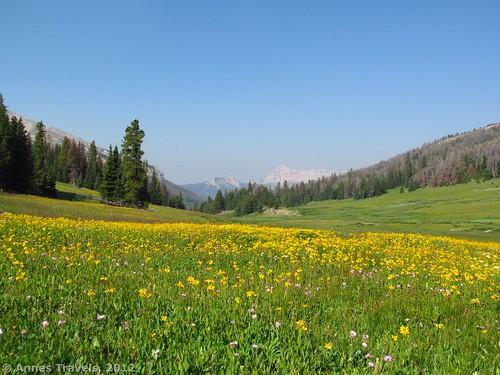 Bonneville Pass, Shoshone National Forest - Bridger Teton National Forest, Wyoming