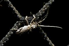 121108-bugs-056