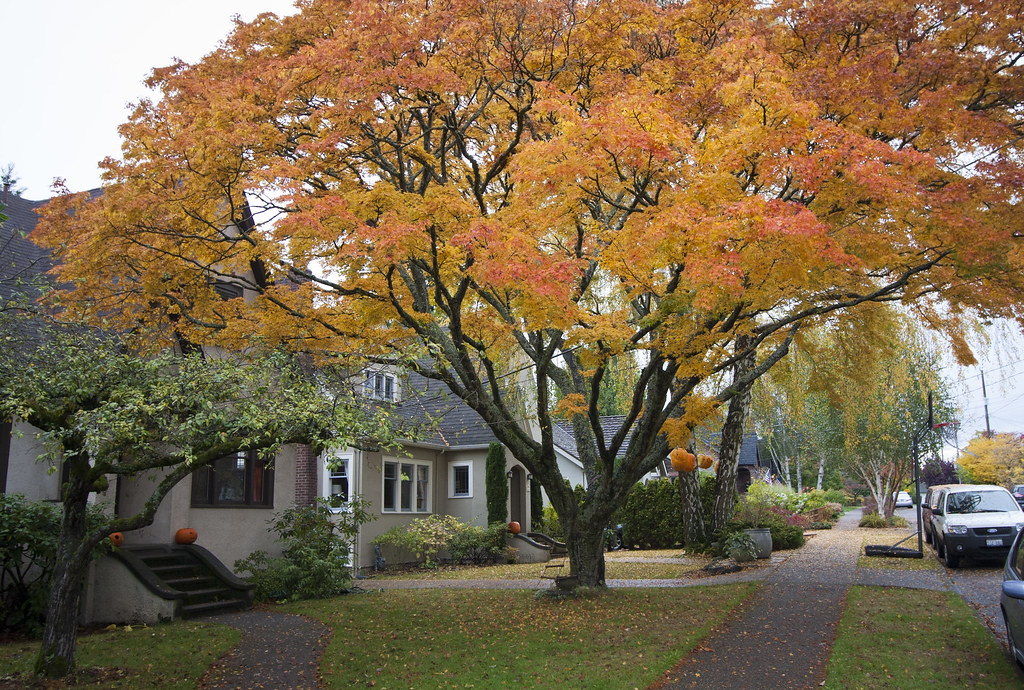 Epic front yard tree andy simonds flickr for Best yard trees for small front yard