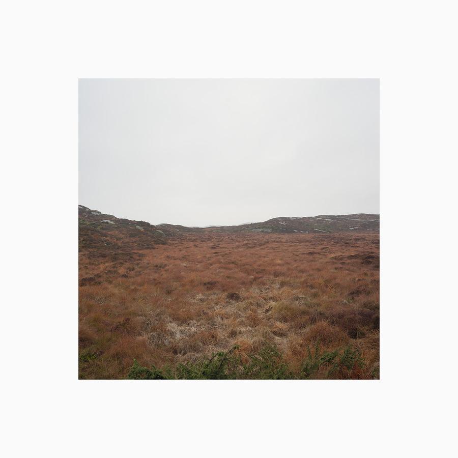 Yellow, brownish grass. Moorland. Grey sky.
