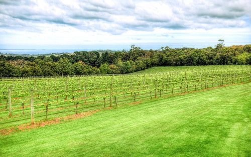 Red Hill Winery Tours Horseback