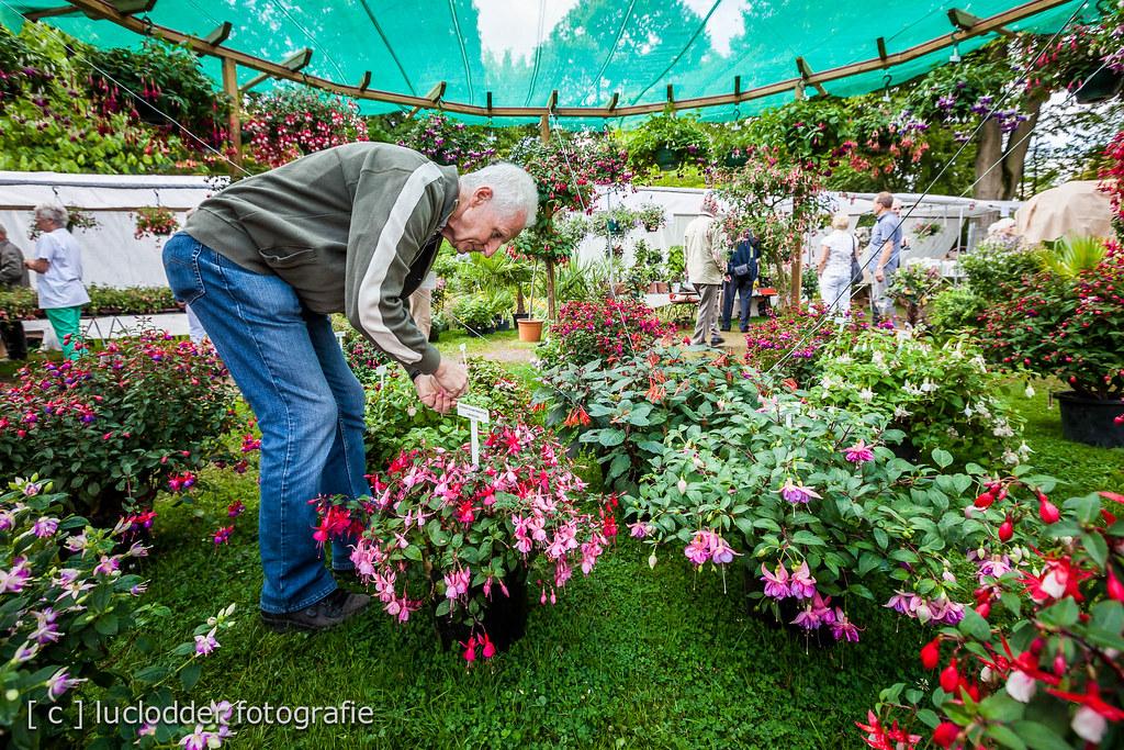Botanische Tuin Kerkrade : Hub stoffels van de fuchsia show in de botanische tuin keru flickr