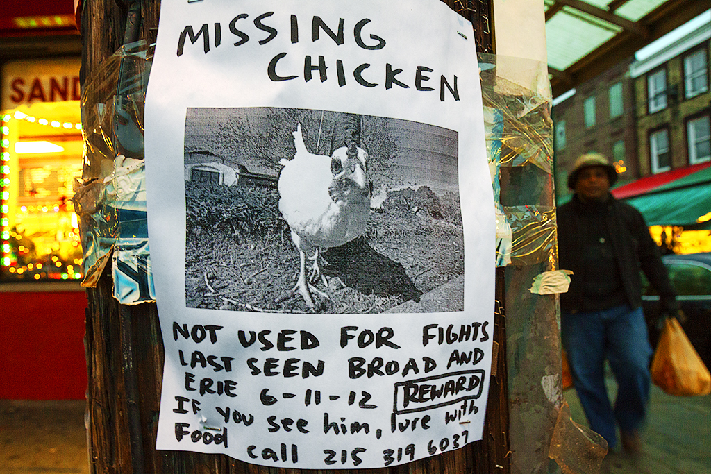 MISSING-CHICKEN--Italian-Market