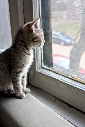 Window Looker