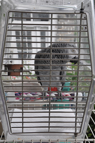 Travel Bird Cages For Sale