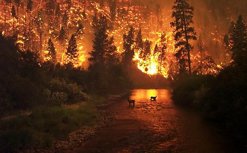 Recent Terrible Natural Disasters