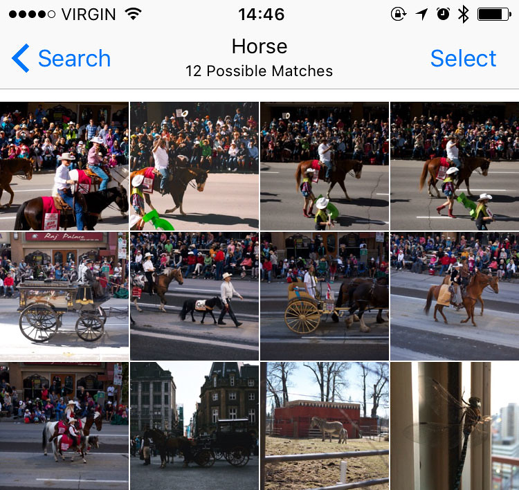 Searching for and finding horses in my photo library