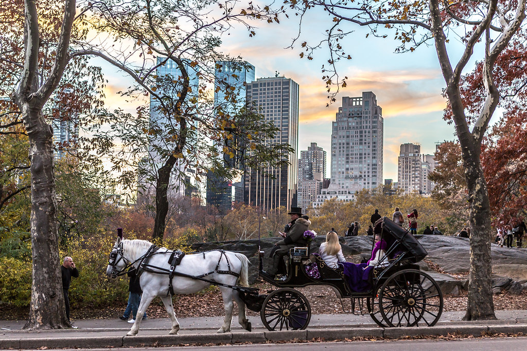 horse carriage ride in central park peter habbit flickr. Black Bedroom Furniture Sets. Home Design Ideas
