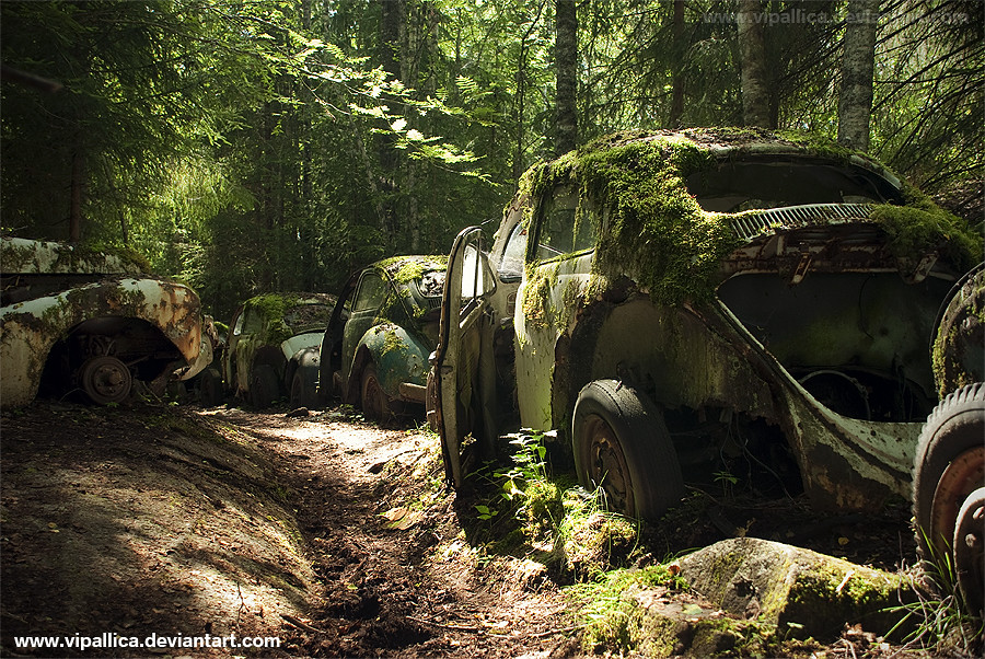 Old Classic Cars >> VW Beetles, Car Cemetery, Sweden | Somewhere hidden in a ...