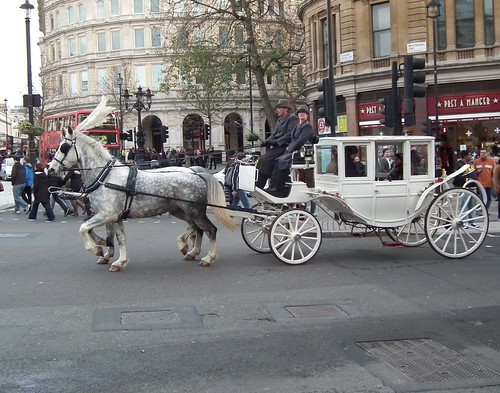 White Horse Carriage White Horse Amp Cart