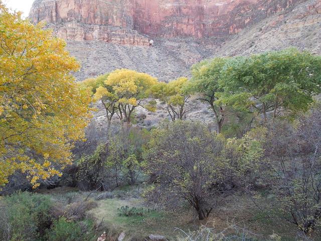 indian gardens grand canyon flickr photo sharing