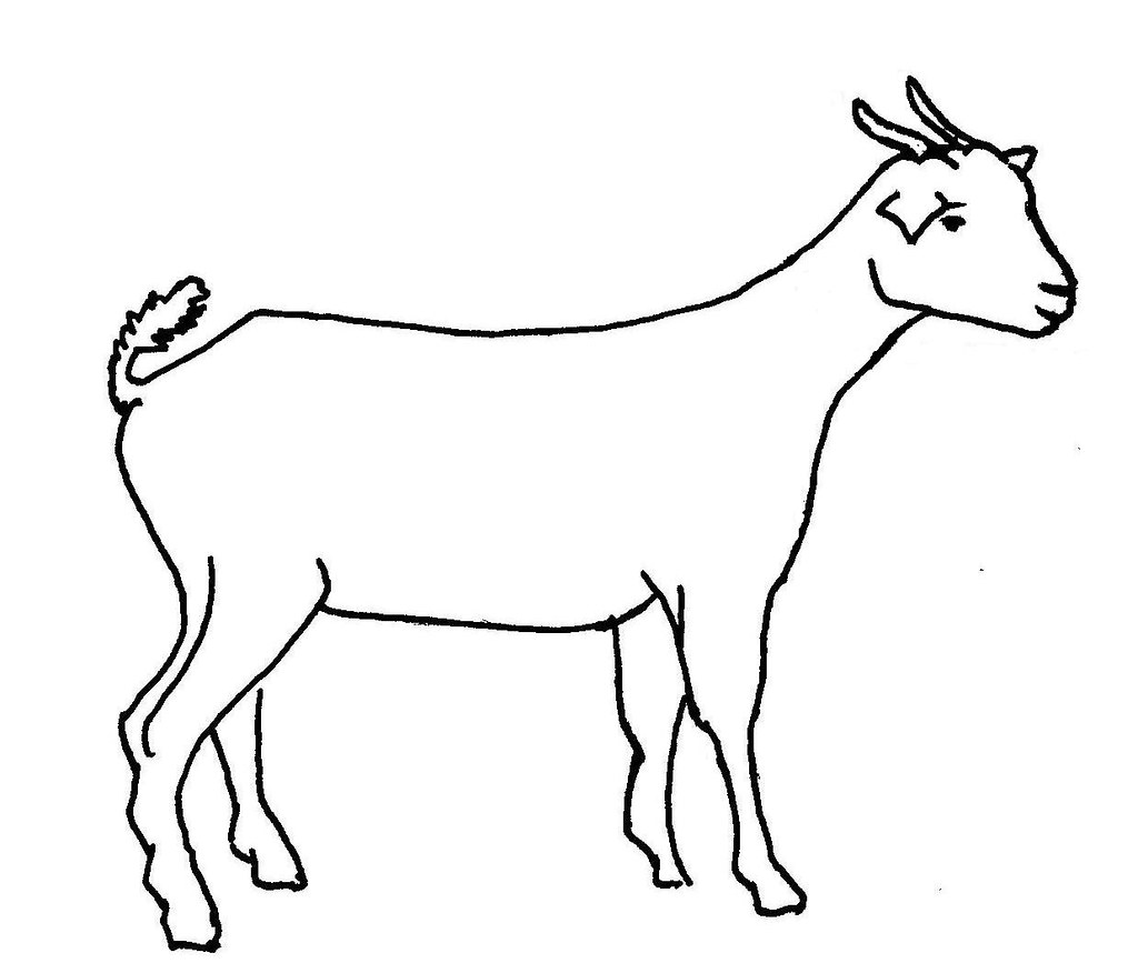 Line Drawing In C : Line drawing of a goat used in information flyer on