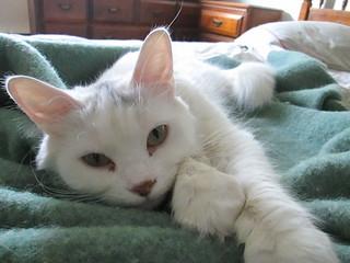 Maggie sur mon lit maggie fait la sieste sur mon lit rachel flickr - Mon chaton fait pipi sur mon lit ...