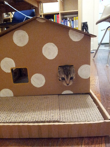 Z's Polka Dot Cat House