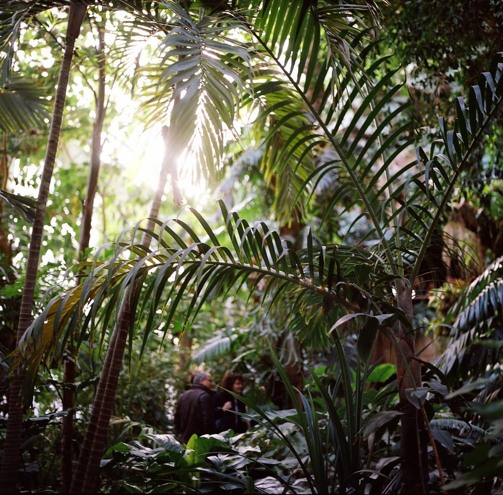 Dans le jardin des plantes photogreuhphies flickr - Jardin des plantes aix les bains ...