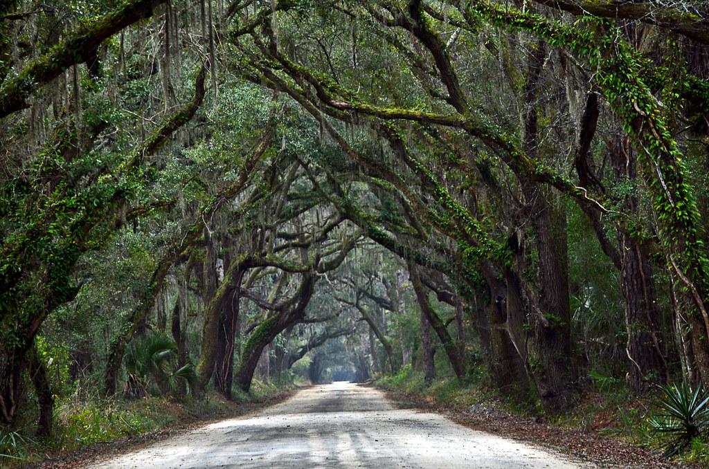 Charleston Sc Natural Resources