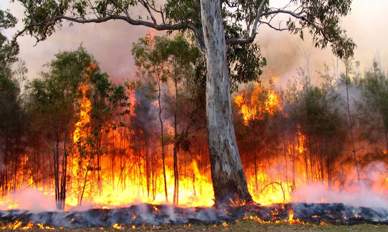 Bush Fire Safety: How To Survive A Bush fire